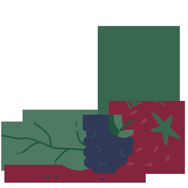 Fruit and Vegetable illustration
